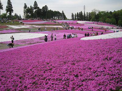 柴桜の丘Ⅳ