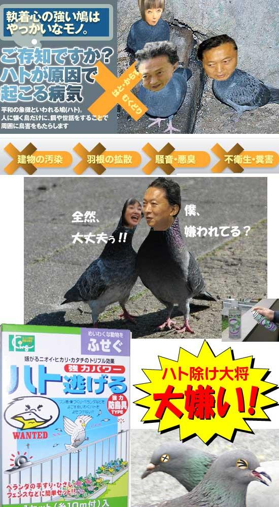 hatokujyo200909.jpg