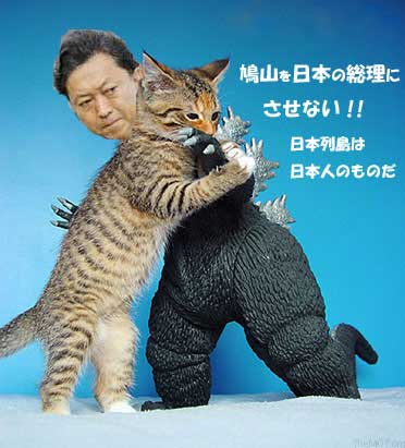 hatoyamavsneko1.jpg