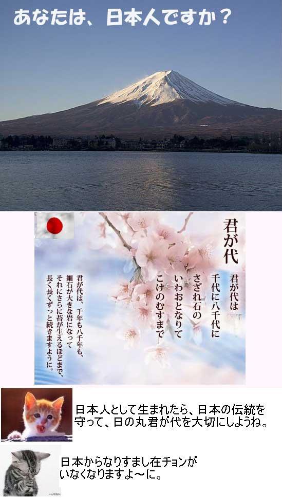 japanshinomarukimigayo1.jpg