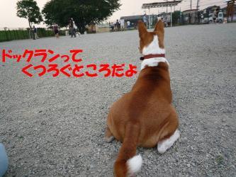 bP1020579.jpg