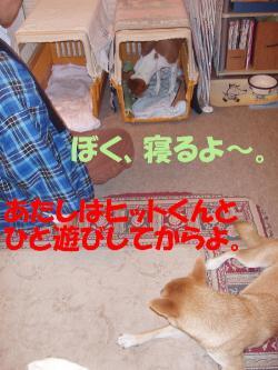 bPB050013.jpg