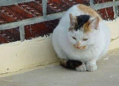 三毛猫シーン1