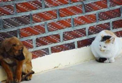 三毛猫シーン2