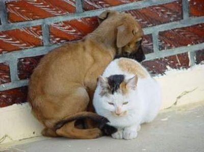 三毛猫シーン3