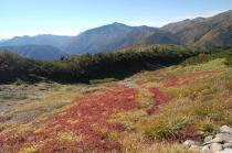 紅葉の斜面越に見る黒部五郎岳