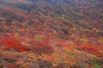 姥が平の紅葉1