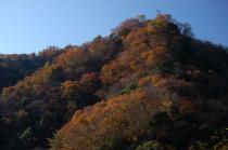 竜神川沿いの紅葉