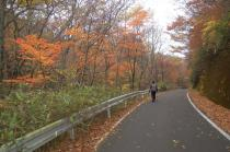 猿ヶ城林道