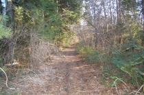 加賀田山への林道