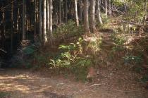 林道からの加賀田山への取りつき口