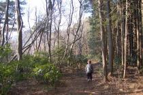 加賀田山からの山道