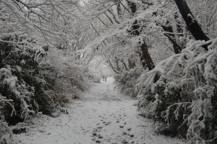 雪降り積もる難台山への山道
