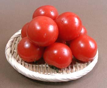 midi-tomato.jpg