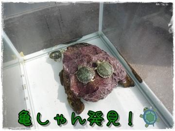 2009-05707.jpg