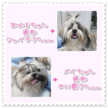 2009-05924.jpg