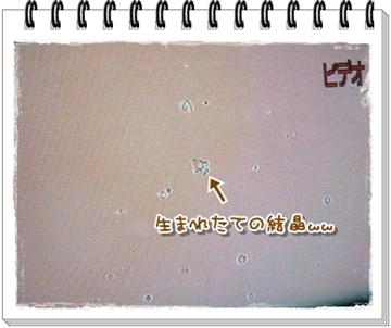 2009-06031.jpg