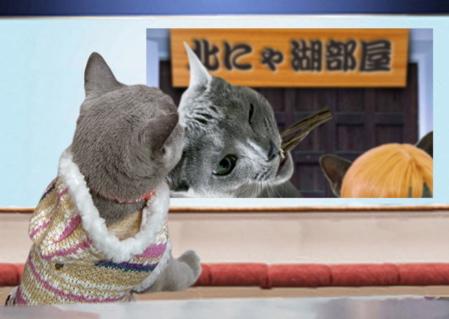 相撲猫オチ