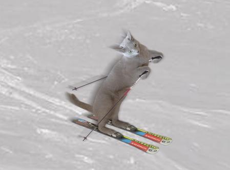 スキーみど完成