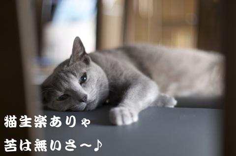 水戸猫門歌詞1