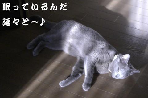 水戸猫門歌詞3