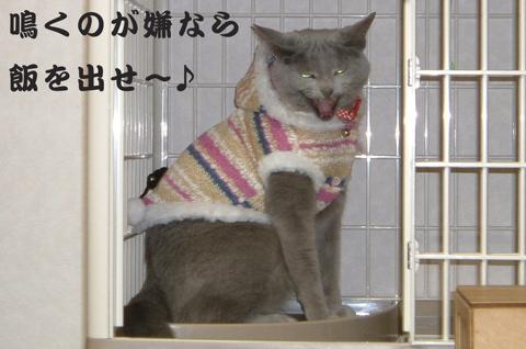水戸猫門歌詞4