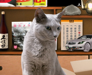 大掃除猫4