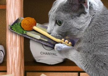 大掃除猫6