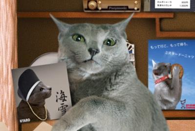 大掃除猫10