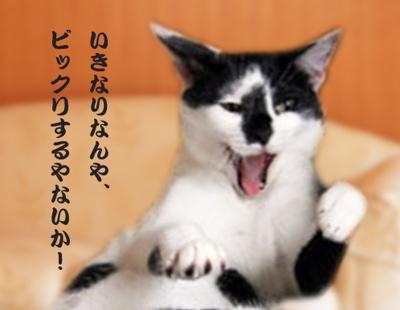 ディニャス猫の惑星4