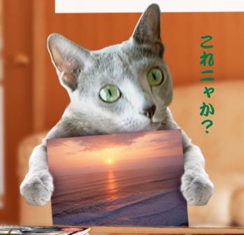 ディニャス猫の惑星7
