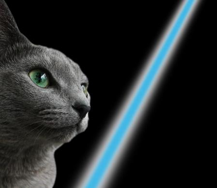 CAT WARS3
