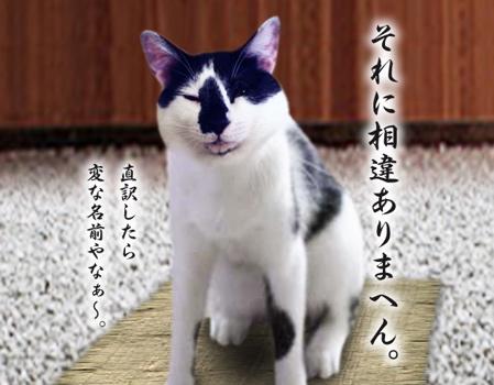 キンちゃん11