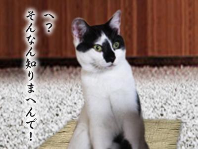 キンちゃん13