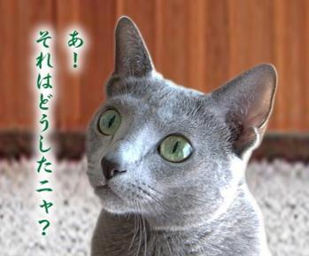 キンちゃん24