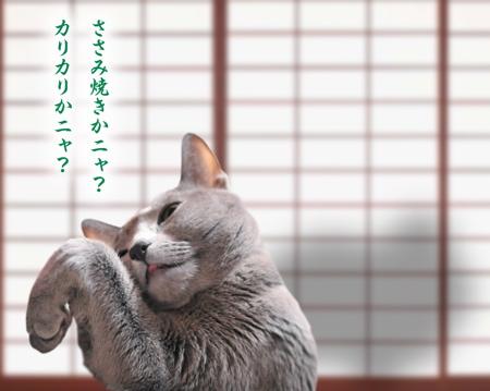 猫の恩返し11