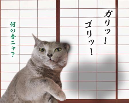 猫の恩返し12