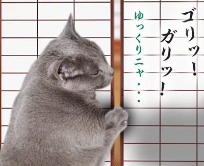 猫の恩返し13