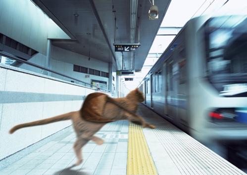 旅立ちみど電車