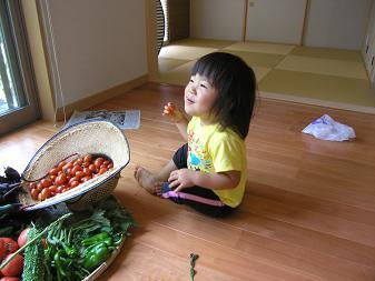 トマトつまみ食い