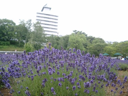 東海大学札幌キャンパス