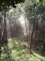 夕立後の森96