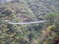 梅の木轟の吊橋