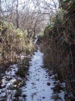 残雪トレイル
