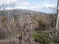 白鳥山方面の展望