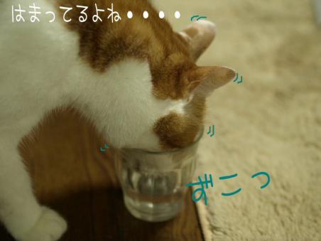 抜けない・・・・( ̄Д ̄;;