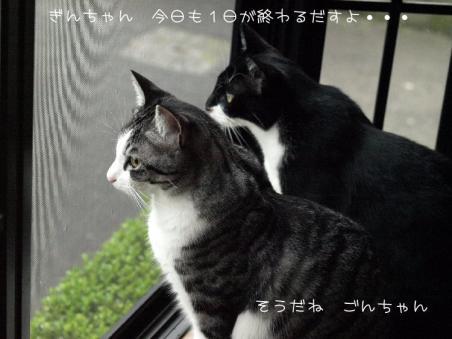 兄弟です(*´∇`*)