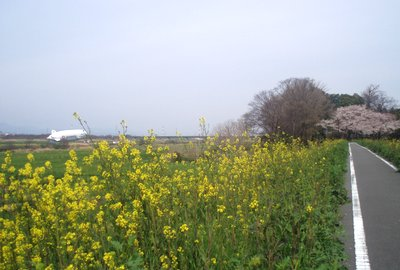 今日もぱっとしない天気@泉福寺付近の荒川左岸CR)
