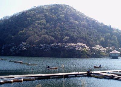 定点ポイント@円良田湖と桜