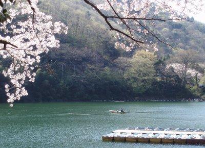 間瀬湖の桜を堪能1